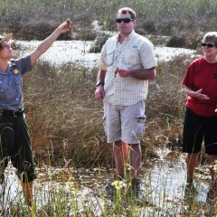 E is for Everglades National Park Tram Tour