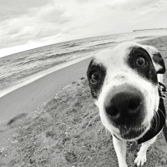 My Dog Was Diagnosed with Myasthenia Gravis. Now What?