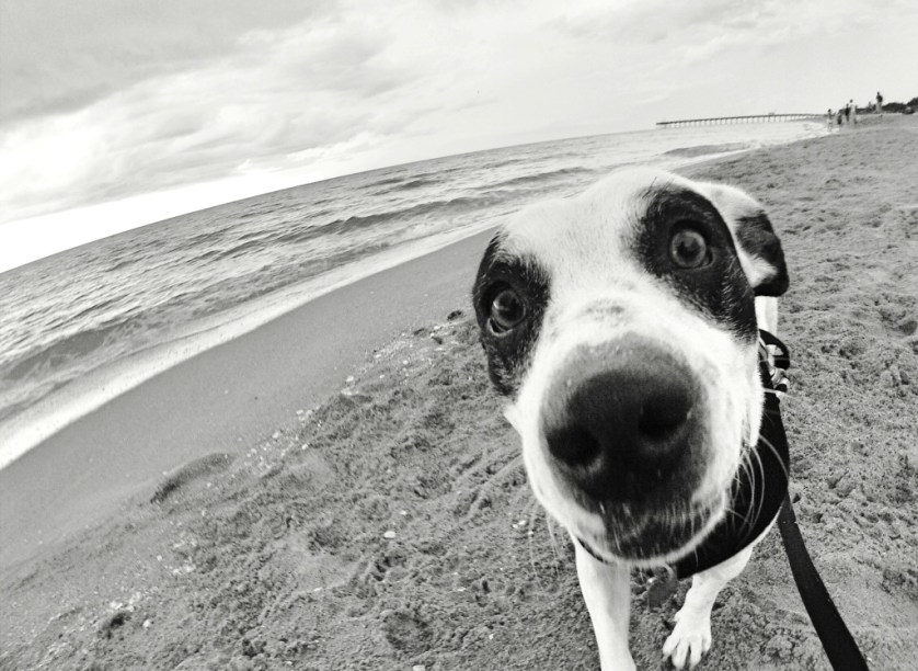 Radcliff at Venice Dog Beach Prior to Being Diagnosed with Myasthenia Gravis