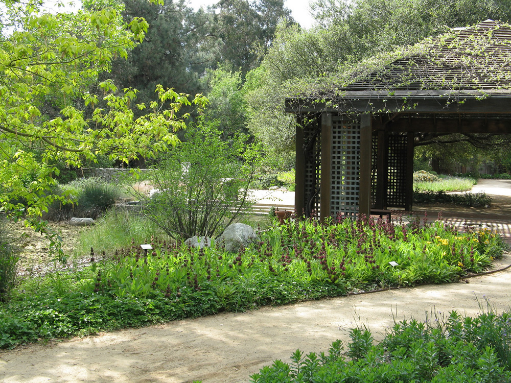 Rancho-Santa-Ana-Botanic-Garden