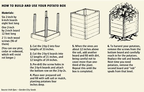 grow-100-lbs-of-potatoes-in-4-sq-ft