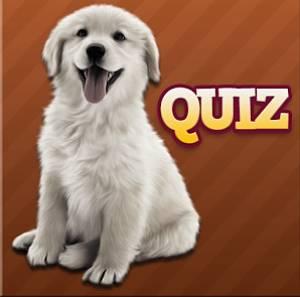 solution Races de chien Quiz niveau 1 à 30