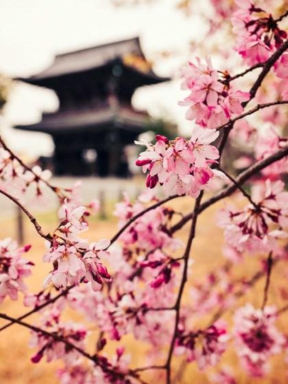 Spring in Kyoto