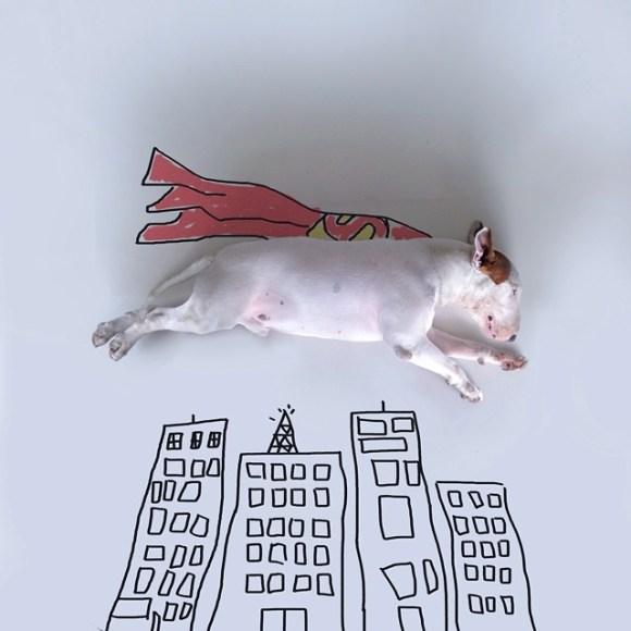 Cães e desenhos (2)