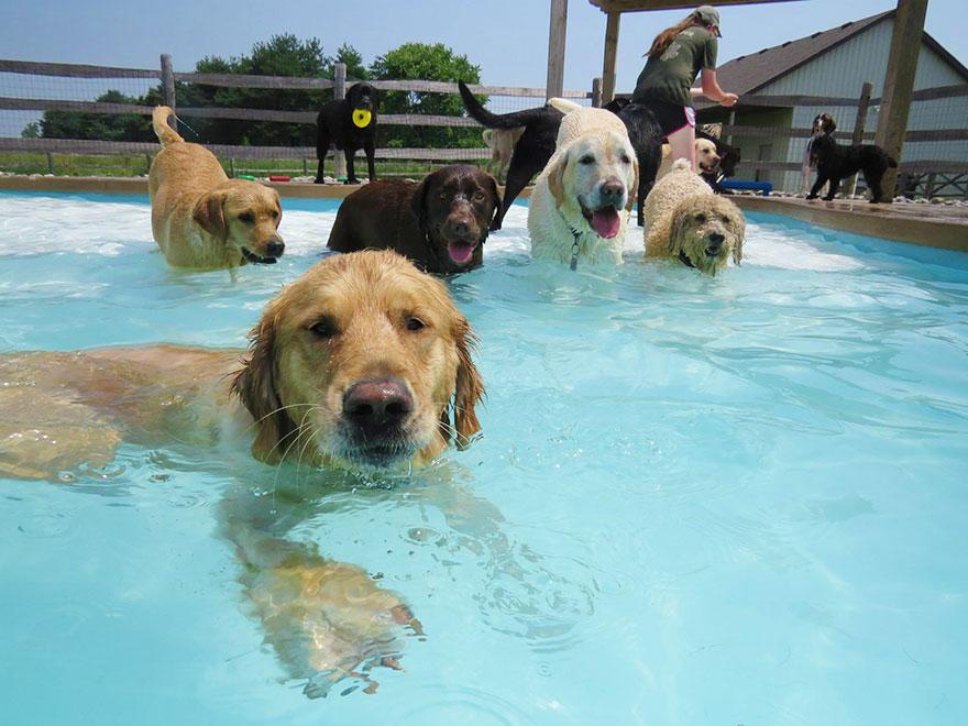 Cachorros se divertem em festa na piscina for Piscina party