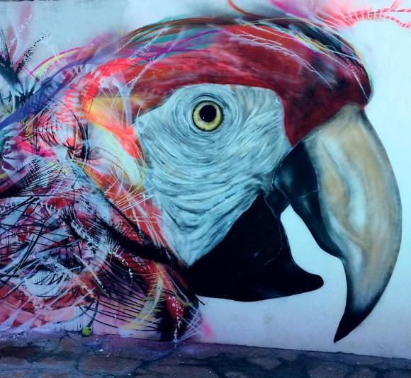grafite spray pássaros (9)