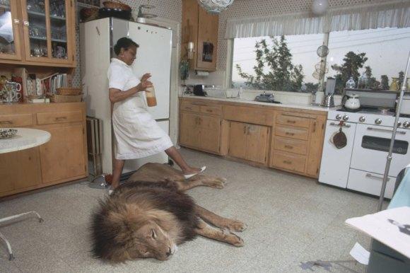 Vivendo com um Leão (3)