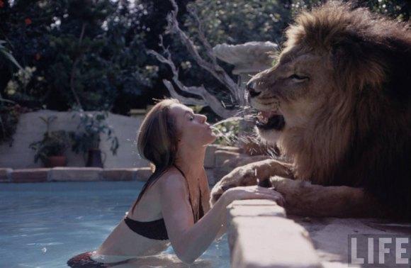 Vivendo com um Leão (8)