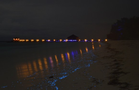 Praias luminescentes 2