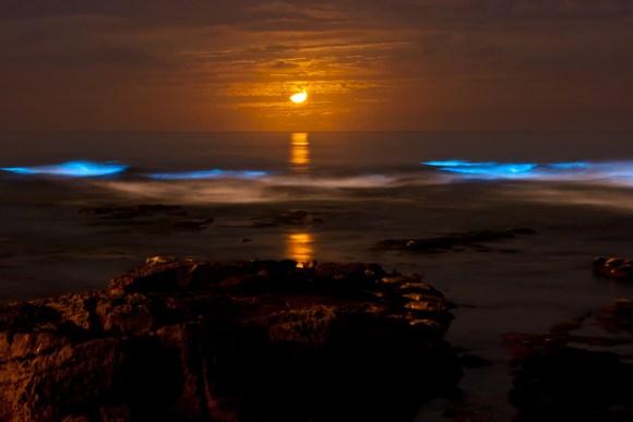 Praias luminescentes 3