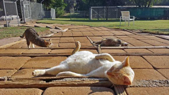 Santuário dos gatos 2