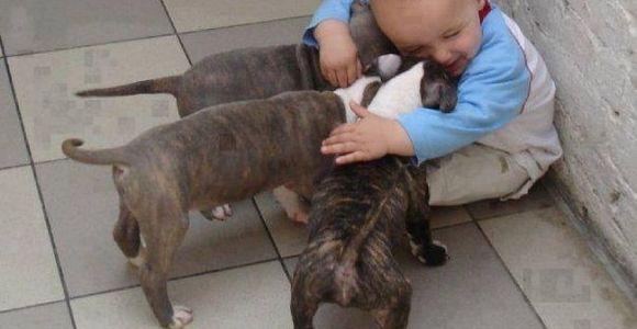 31 fotos que vão mudar seu dia, provam que crianças e animais foram feitos um para o outro!