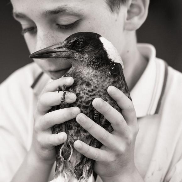 Amizade entre menino e pássaro 10