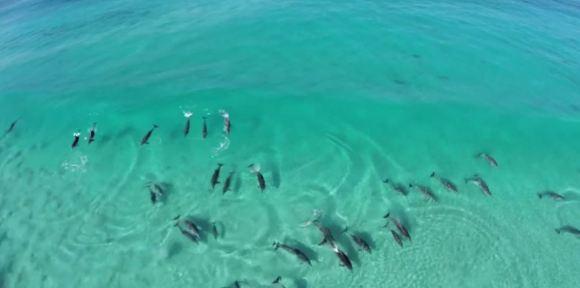 Golfinhos nas ondas