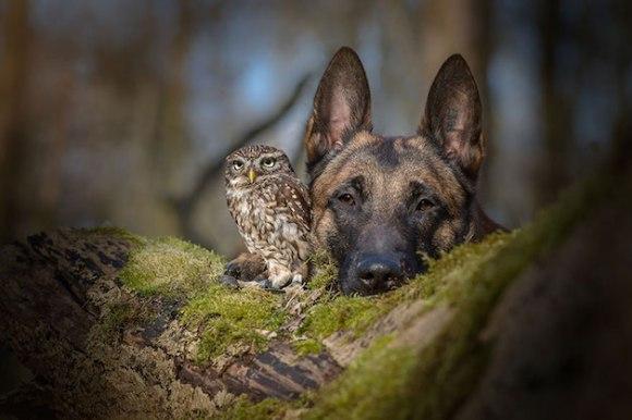 cachorro-e-coruja