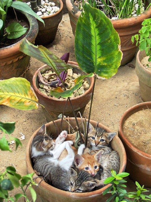 Gatos em vasos 3