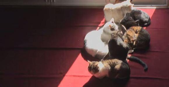 Vídeo em time-lapse mostra gatinhos acompanhando o movimento do sol ao longo do dia