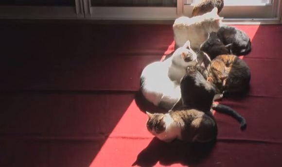 Gatos no sol