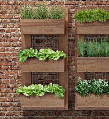 8 ideias para fazer uma mini-horta na sua casa