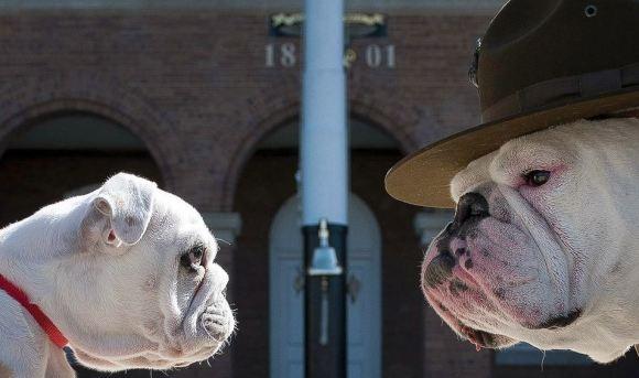 Fotos de cachorros 11
