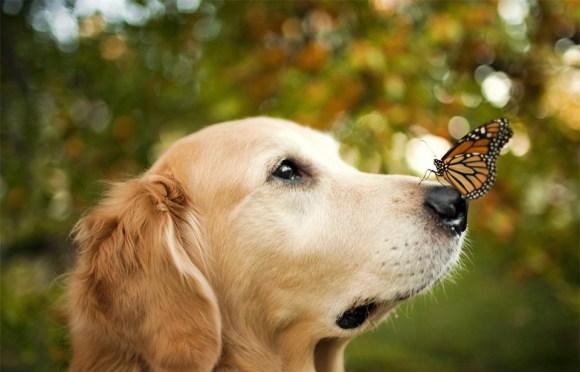Fotos de cachorros 19