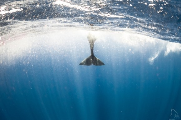 Mergulhando com baleias 1