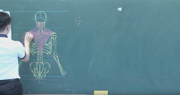 Desenhos de anatomia 7