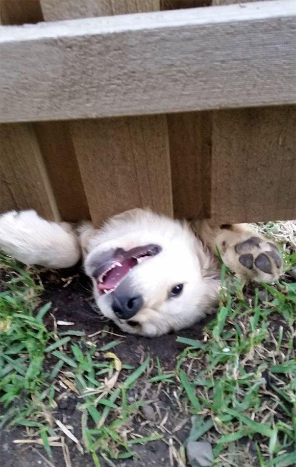 Cachorros que gostam de olhar a rua 11
