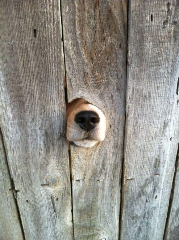 Cachorros que gostam de olhar a rua 16
