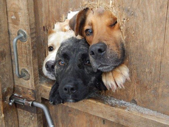 Cachorros que gostam de olhar a rua 8