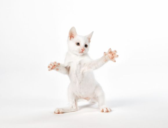 filhotes-de-gato-4