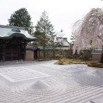 桜の見頃時期に京都清水寺・高台寺へお花見へ行ってきました【後編】