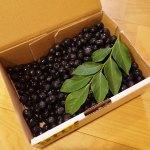 鹿児島県伊佐市から無農薬ブルーベリーが届きました!