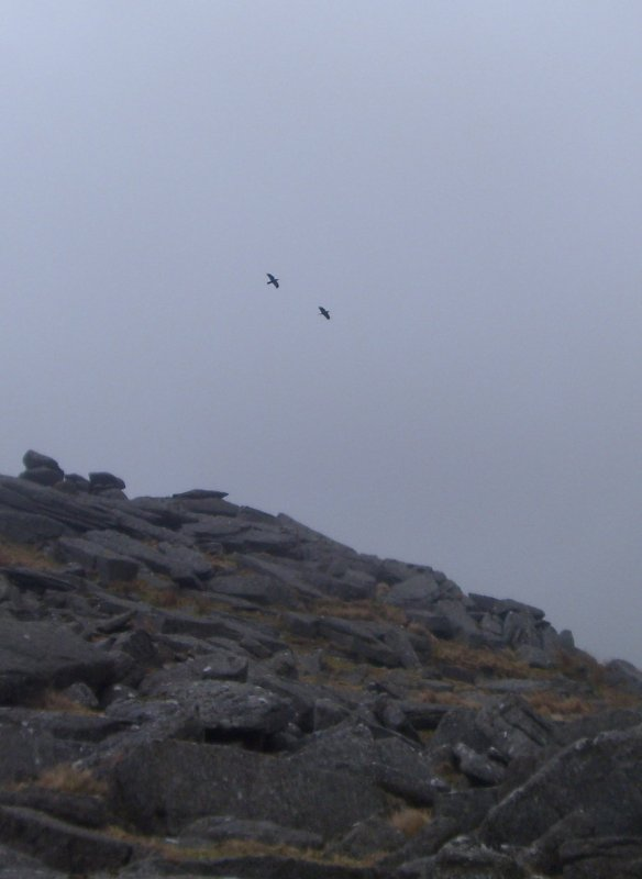 Huginn and Muninn fly over Great Staple Tor - Dartmoor