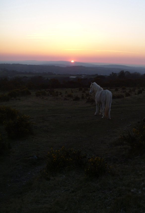 Dartmoor Pony. Something About Dartmoor.