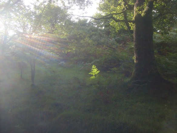 Then we headed back through 'Raven Wood' - where 'Mary Light' cameout to play...
