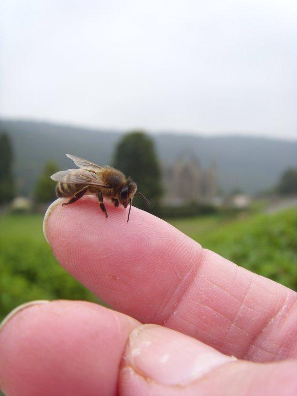 Something about Dartmoor - Honey Bee