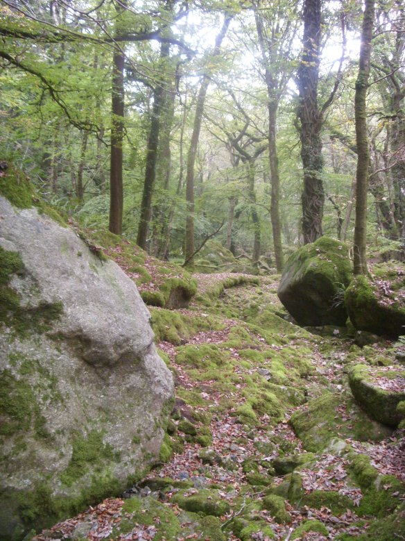 Something about Dartmoor