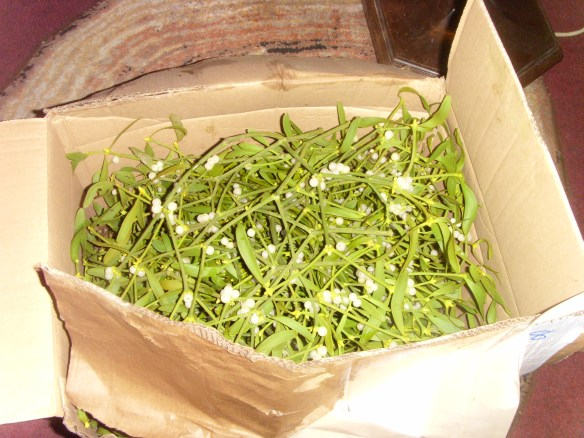 A box of delight; Mistletoe.