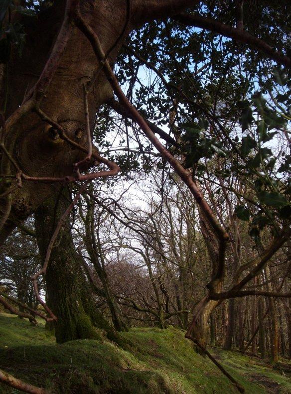 Dartmoor - a walk through Raven Wood after the rain
