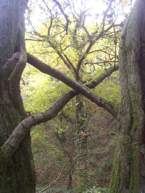 baucis-and-philemon-hawthorns-torrington-commons-something-about-dartmoor