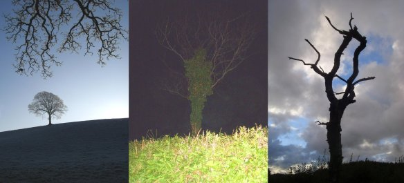 familiar-trees-something-about-dartmoor
