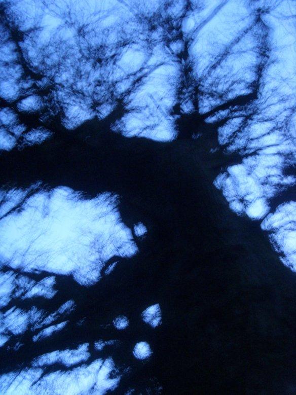 Mistletoe for the naked trees in 'Shedland'.