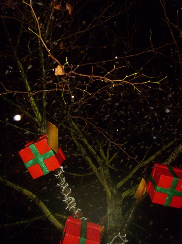 Christmas all wrapped up for Wagtails roosting in the city centre.