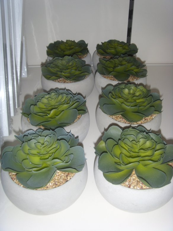Two neat rows of Sempervivium -