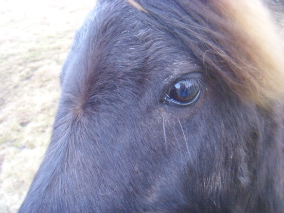 Reflection of myself in the eye of a Dartmoor Pony.