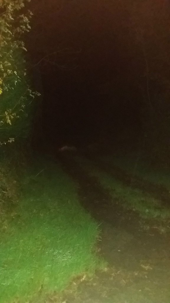 Down a deep, dark, Devon lane (2)