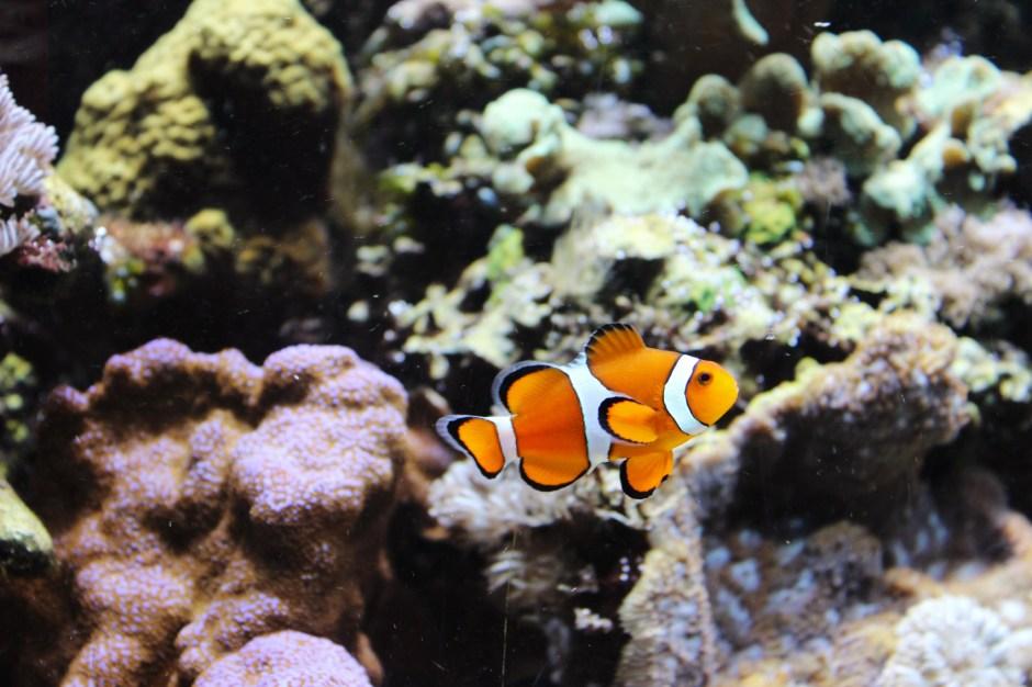 aquarium-zsl-london