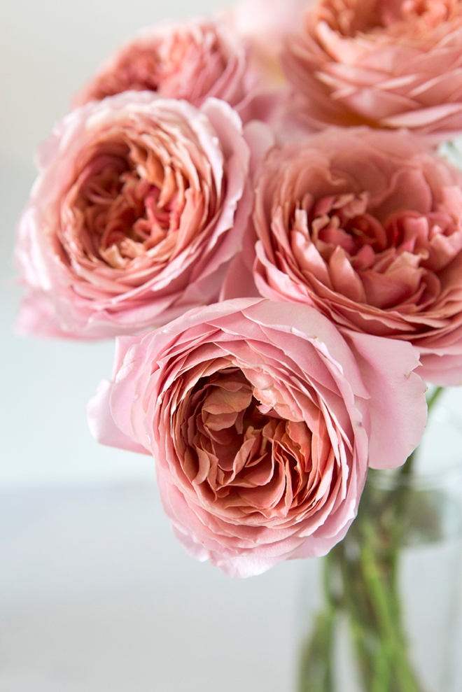 How to take care of garden roses delivered from FiftyFlowers!