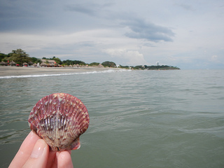 Seashell by the seashore